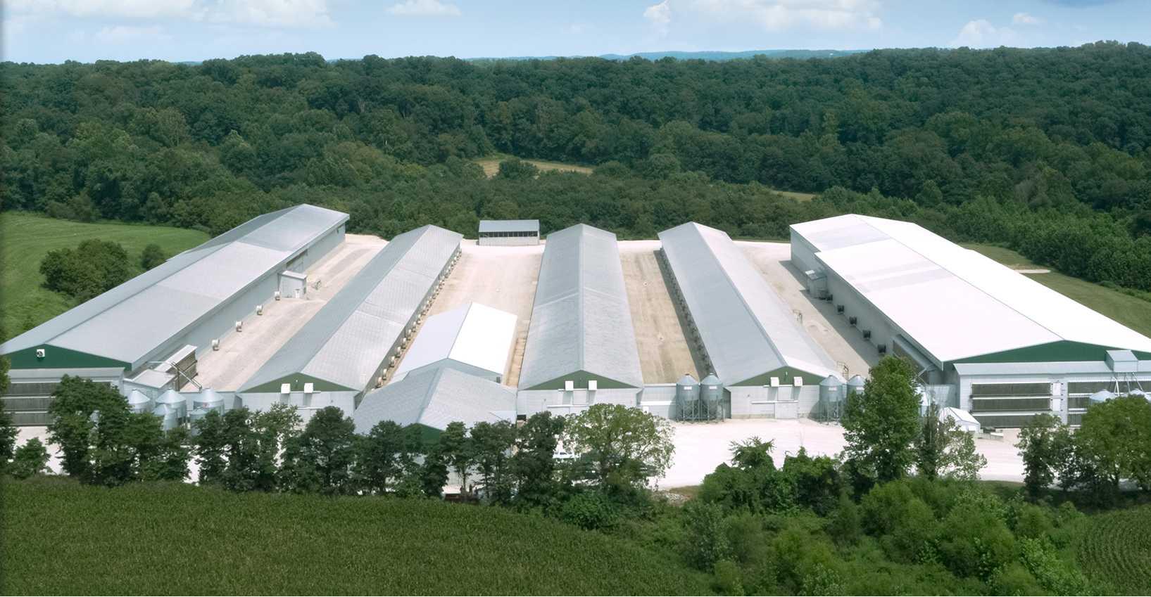 Wabash Valley   Egg Supplier - operations farm 01