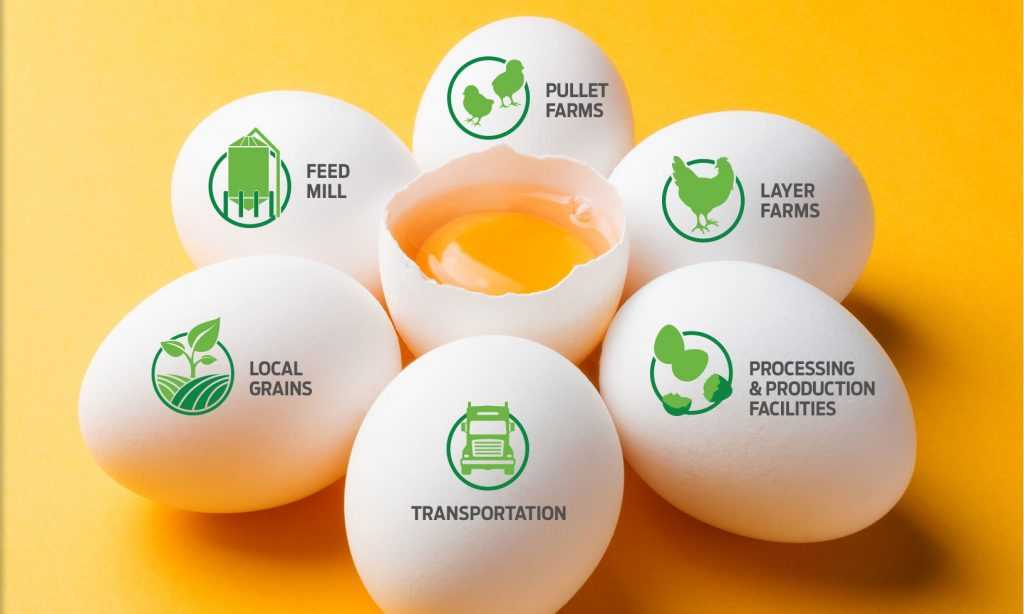 Wabash Valley   Egg Supplier - IntegratedProcess Operations